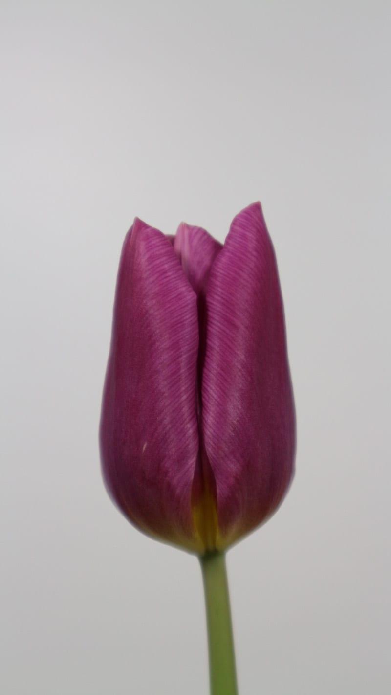 Cultivar Copex